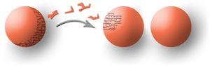 Illustration du paradoxe de Banach-Tarski