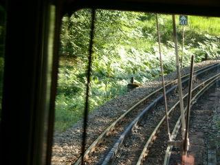 Sur le Chemin de fer Martigny-Châtelard, à droite le 3e rail d'alimentation électrique, et au centre des rails de roulement, la crémaillère de ce chemin de fer de montagne