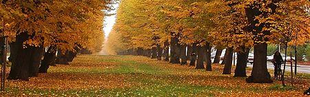 Allée en automne.