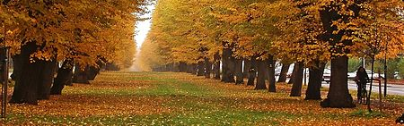 All�e en automne.