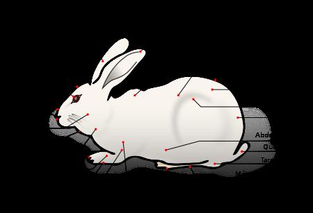Domestic Rabbit-fr.svg