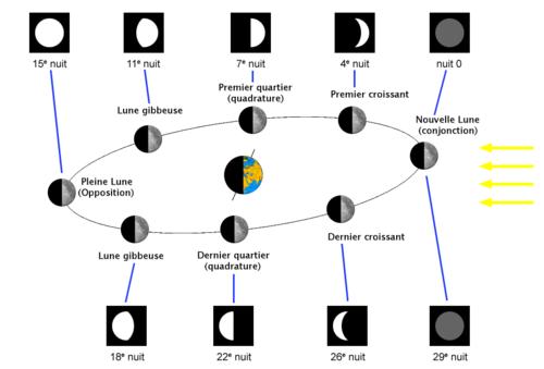Orbite de la Lune et phases vues depuis la Terre