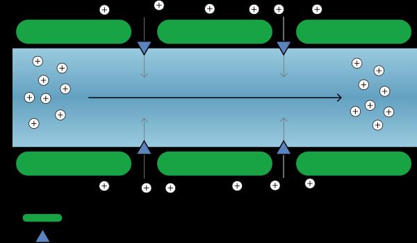 Propagation de l'influx nerveux dans un axone myléinisé