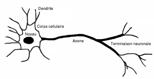 Image:Neurone.png