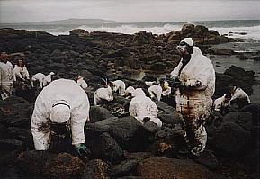 Volontaires nettoyant la cote de Gallice après la catastrophe du Prestige