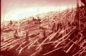 Tronc d'arbres couchés par l'impact météoritique à Toungouska, Sibérie, le 30 juin 1908. Photo datant d'une expédition de 1927